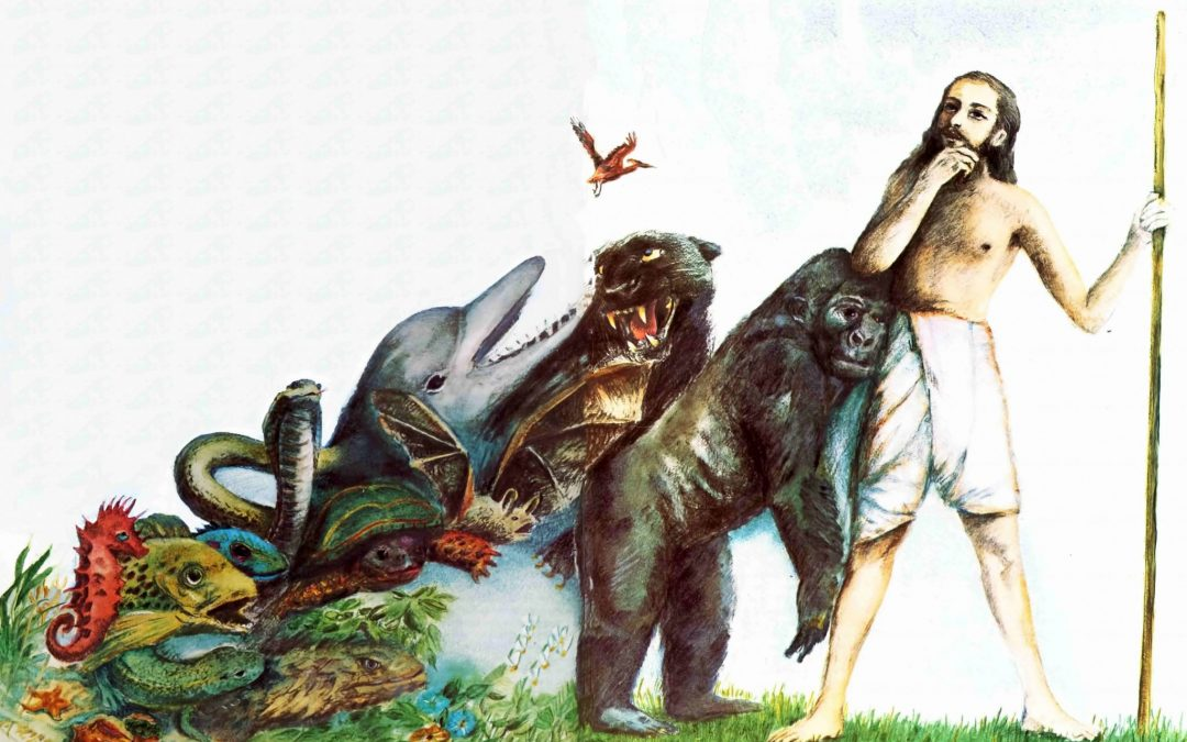 The theory of evolution has only one tiny flaw: No real evidence 4.6 (38)